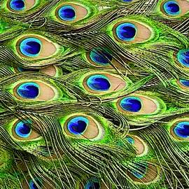 Colorful Peacock Feathers by Denise Mazzocco