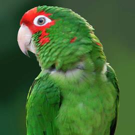 Colorful Profile by Mariarosa Rockefeller