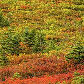Colorful Rainier Panorama by Marv Vandehey