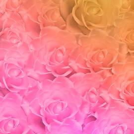 Colorful Roses Art Design by Johanna Hurmerinta