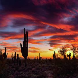 Colorful Saguaro Sunset Skies  by Saija Lehtonen