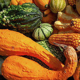 Colorful Squash and Gourds by Jenny Rainbow