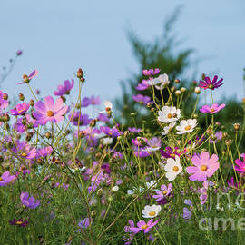 Colorful Summer  by Flo Photography