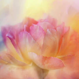 Colorful Textured Rose by Terry Davis