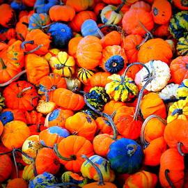 Colorful Tiny Pumpkins by Cynthia Guinn