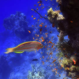 Colorful Wonders of the Red Sea by Johanna Hurmerinta