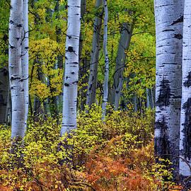 Colors Of October by John De Bord
