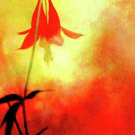 Columbine Sunset by Anita Pollak