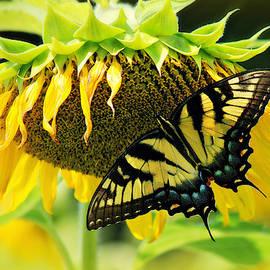 Come Taste my Nectar by Marilyn DeBlock