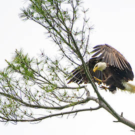 Coming in for a Landing by Robert J Wagner