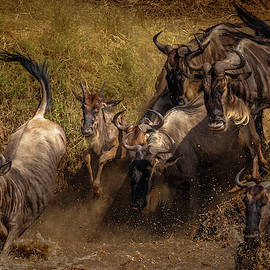 Committment...the Great Migration by Tim Bryan