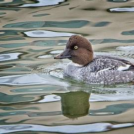 Rick Graham - Common Goldeneye