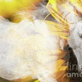 Concept - Australian Horse With A Sunflower. by Rob D Imagery