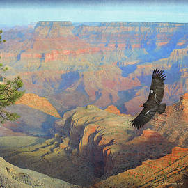 Condor At Grand Canyon by R christopher Vest