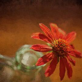 Coneflower Closeup by Francis Sullivan