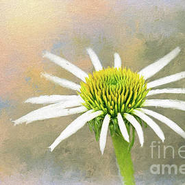 Coneflower In Morning Light by Sharon McConnell
