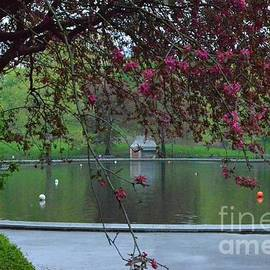 Conservatory Water - After the Rain - Central Park New York by Miriam Danar