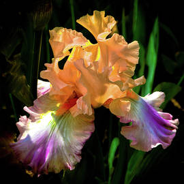 Coral and Purple Iris by David Patterson