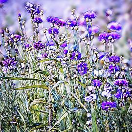 Cornflower Meadow by Susan Maxwell Schmidt