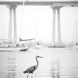 Coronado Bridge and Blue Heron by William Dunigan