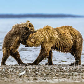 Coastal brown bears by Lyl Dil Creations