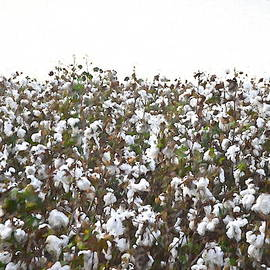 Cotton Field #minimalism by Andrea Anderegg