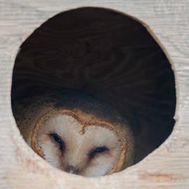 Cozy Barn Owl by Loree Johnson