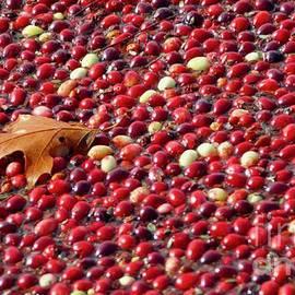 Cranberry Season by Amazing Jules