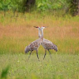 Crane Tango by Loree Johnson