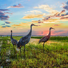 Cranes at Sunset by Debra and Dave Vanderlaan