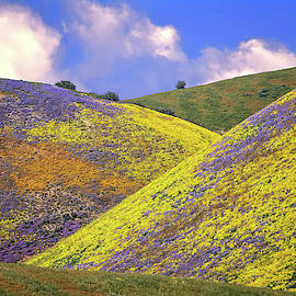 Crazy Colors on the Carrizo - Superbloom 2017 by Lynn Bauer