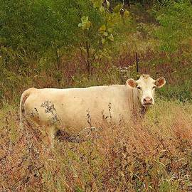 Creamy Cow in the Autumn Field by Carmen Macuga