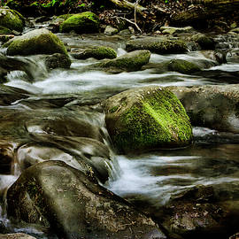 Creek Cades Cove by Evie Carrier