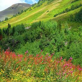 Crested Butte Wildflowers by Susan Warren