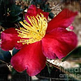 Crimson Camellia. by Trudee Hunter