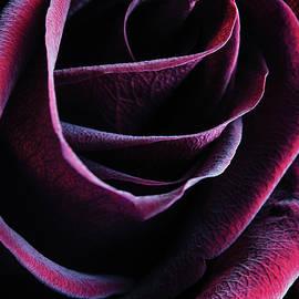 Crimson Queen by Amy Weiss
