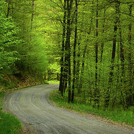 Crossing A Forest Service Road In Vt by Raymond Salani III