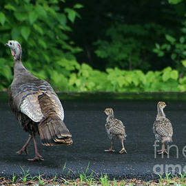 Crossing Over by Barbara S Nickerson
