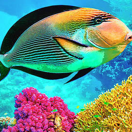 Cruising The Coral by Dominic Piperata