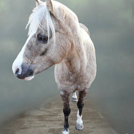 Cute Palomino Pony by Elisabeth Lucas