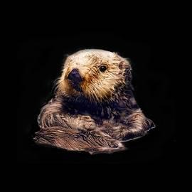 Cute Sea Otter by Jean Noren