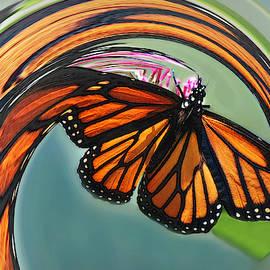 Cyclonic Monarch Butterfly by Marilyn DeBlock
