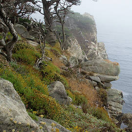 Cypress Cliff by Marie Leslie