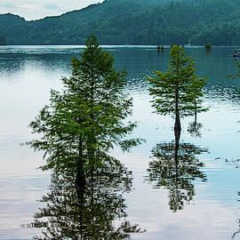 Cypress Reflections by Mary Ann Artz