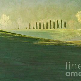 Cypress Tree Lines by Heiko Koehrer-Wagner