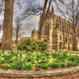 Dafodil flower bed at Princeton University in New Jersey by Geraldine Scull