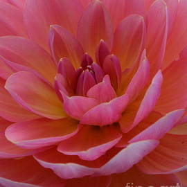 Dahila in Pink by Loretta Bueno