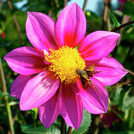Dahlia and Moth by Sally Weigand