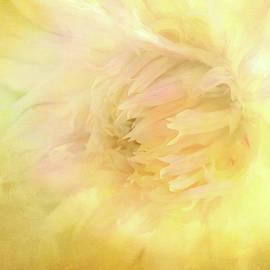 Dahlia Burst by Terry Davis