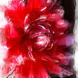 Dahlia In A Dream by Joy Watson